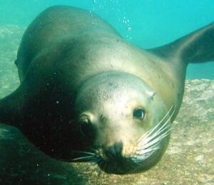 Sea Lion Tours